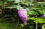 3204 N Bayview Rd, Waldport, OR 97394 - Flowers