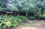 3204 N Bayview Rd, Waldport, OR 97394 - Large trees