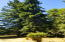 3204 N Bayview Rd, Waldport, OR 97394 - Park like setting