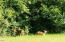 3204 N Bayview Rd, Waldport, OR 97394 - Wildlife