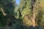 271 E Darkey Creek Rd, Waldport, OR 97394 - Backyard