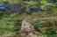 577 N Deerlane Dr, Otis, OR 97368 - Magnificent Tree