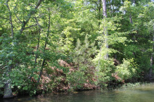 Lot 2 Ph 2 Amber Dr, Jacksons Gap, AL 36861