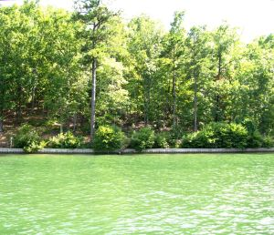 Lot 2 Lake Forrest Dr, Dadeville, AL 36853