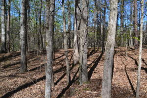 Lot 16 Greensview Terrace, Dadeville, AL 36853