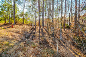 Lot 46 Powell Dr Jacksons Gap AL