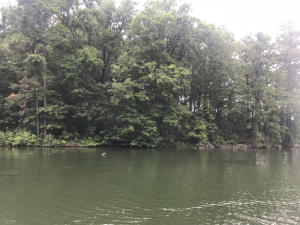 Lot 59 Bay Point, Jacksons Gap, AL 36861