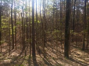 Lot 12 Fern Ridge North, Dadeville, AL 36853