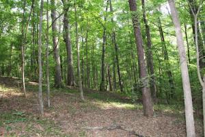 7+/- Acres off Churchill Road, Camp Hill, AL 36850