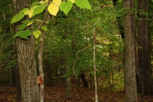 Lot 1 Tower Trail Smith Mountain, Dadeville, AL 36853