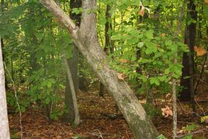 LOT 2 TOWER TRAIL SMITH MOUNTAIN, Dadeville, AL 36853