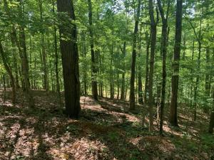 Lot 42A Tanglewood Court, Dadeville, AL 36853