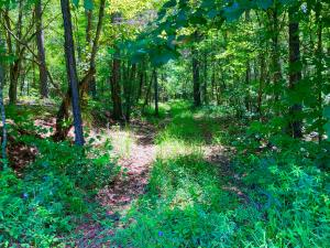 rustic road on property