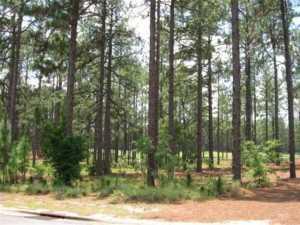 14 Plantation Drive, Southern Pines, NC 28387