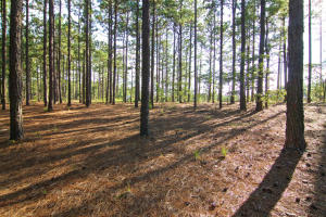 140 Kings Ridge Court, Southern Pines, NC 28387