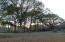 Beautiful trees and plenty of yard!