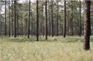 Lot 1 N Fort Bragg Road, Southern Pines, NC 28387