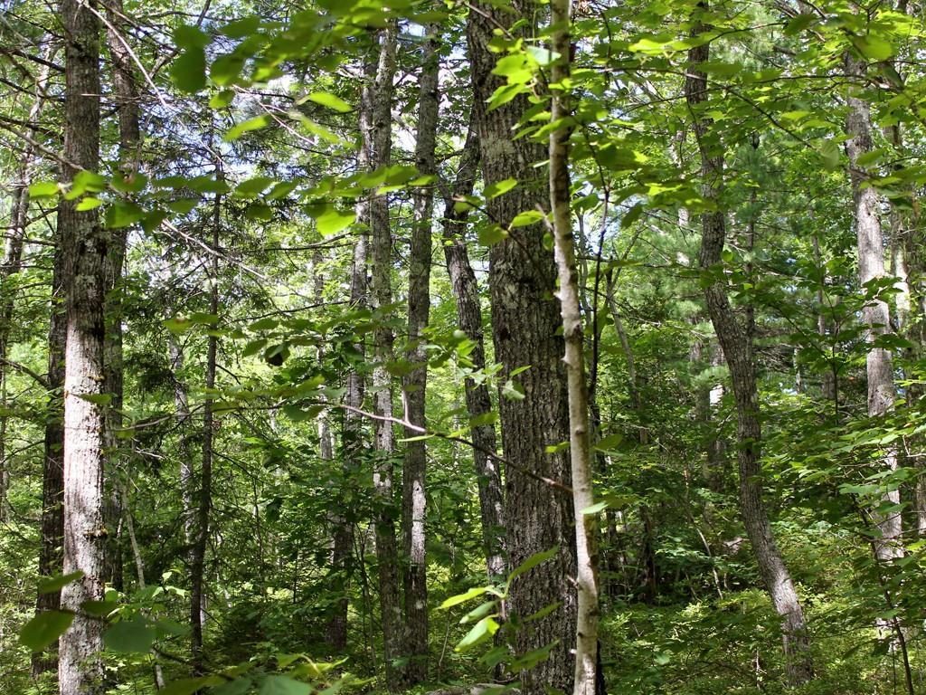 Beautiful Woods