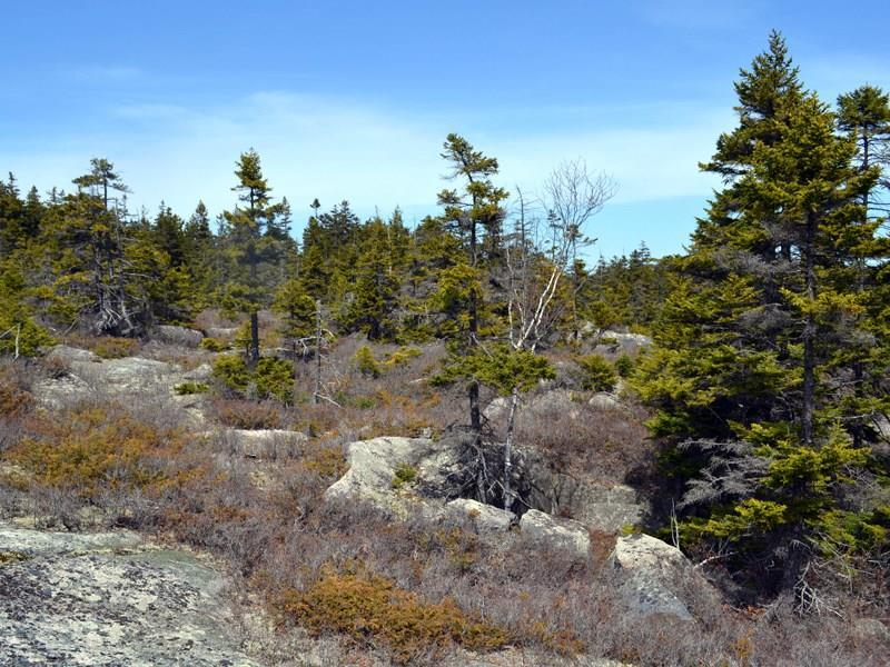 Granite outcroppings.