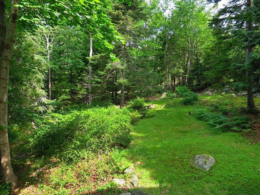 Side lawn surrounded by forest