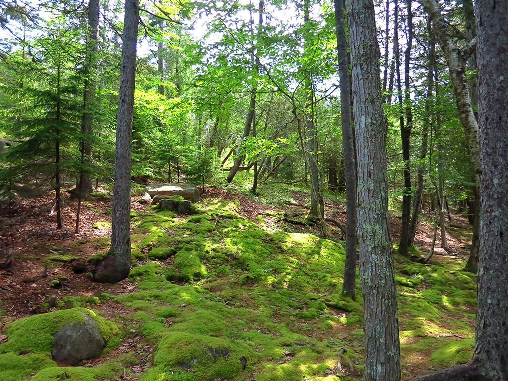 Lush mosses and woods