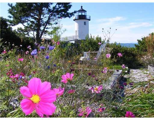 Yard/Garden. Colorful wild flowers...