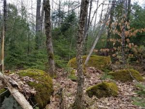 Beautiful lot, sits high and is just minutes walk from Lower Patten Pond Landing and 2.7 miles to Surry Village Public Boat Launch to ocean - deep water.