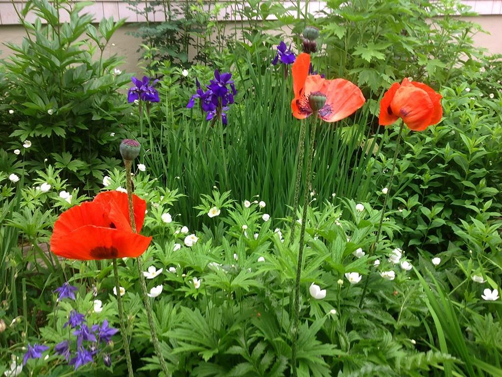 Colorful perennials.
