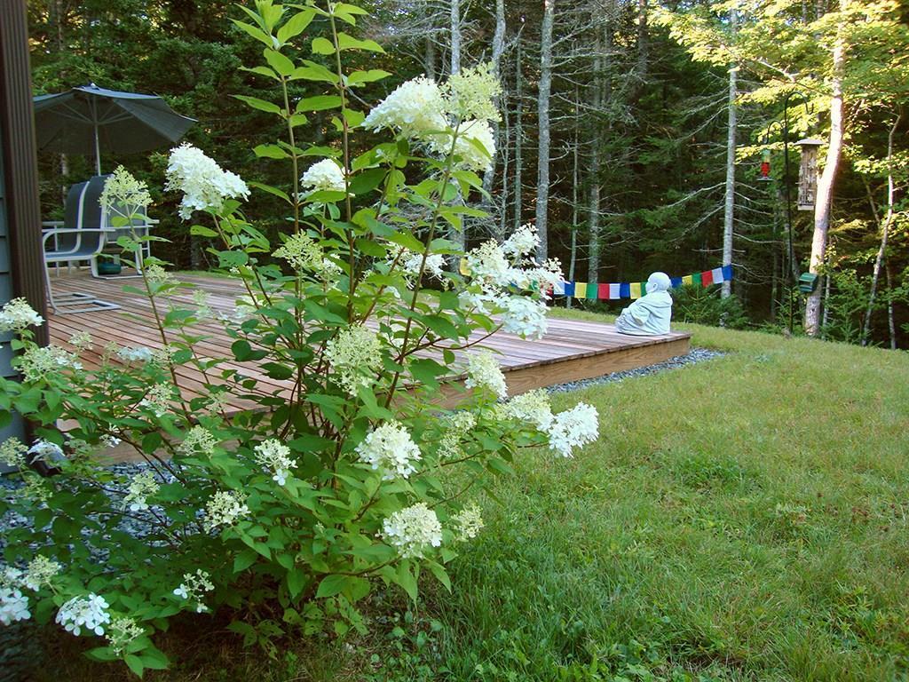 Rear garden and deck