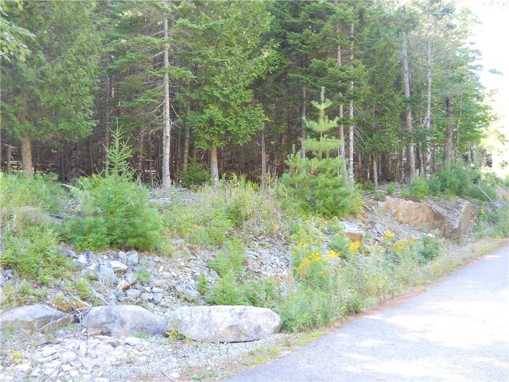 Road and woods surrounding lot