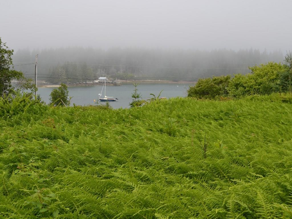 Fog rolling in over the Thorofare.
