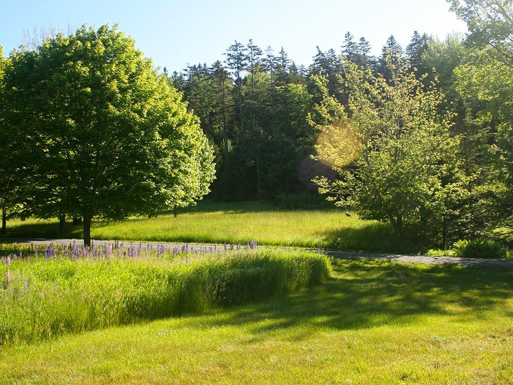 Lawn and field area near tree lined...