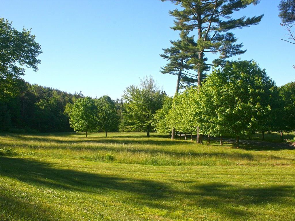 Field along tree lined Drive