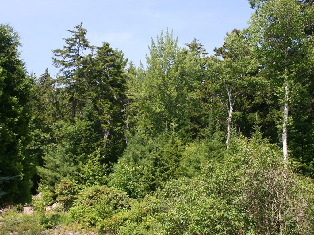 Woods from abutting property