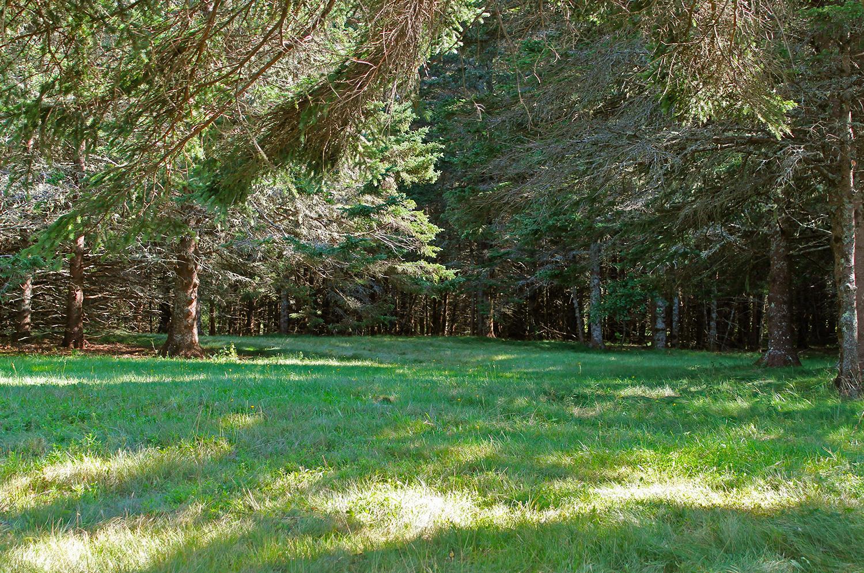 PastureTrees