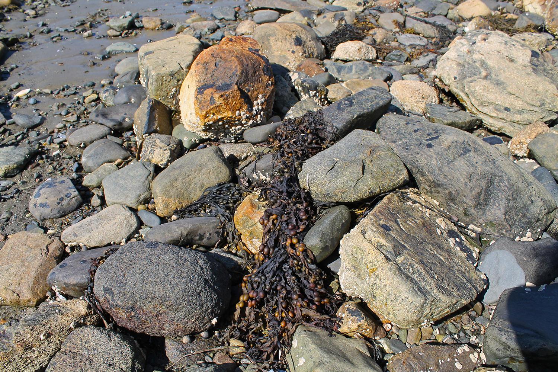 SeaweedPebblesRocks