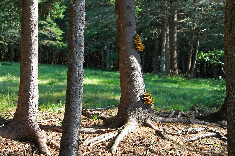 TreesFungus