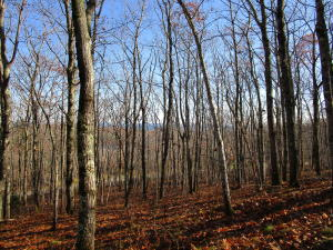 47 Dodge Mountain Road, Rockland, ME 04841
