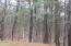Wooded back yard that abuts Thorncrag Bird Santuary