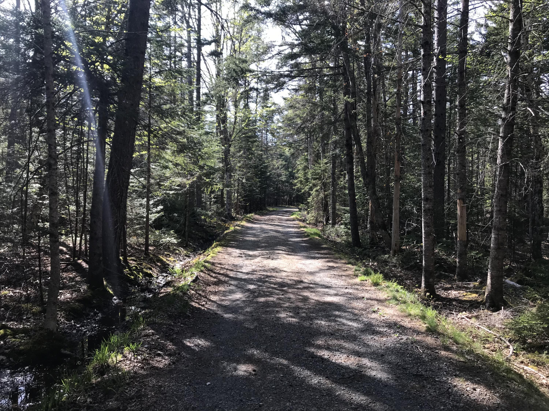Blue Horizons Road for easy walking