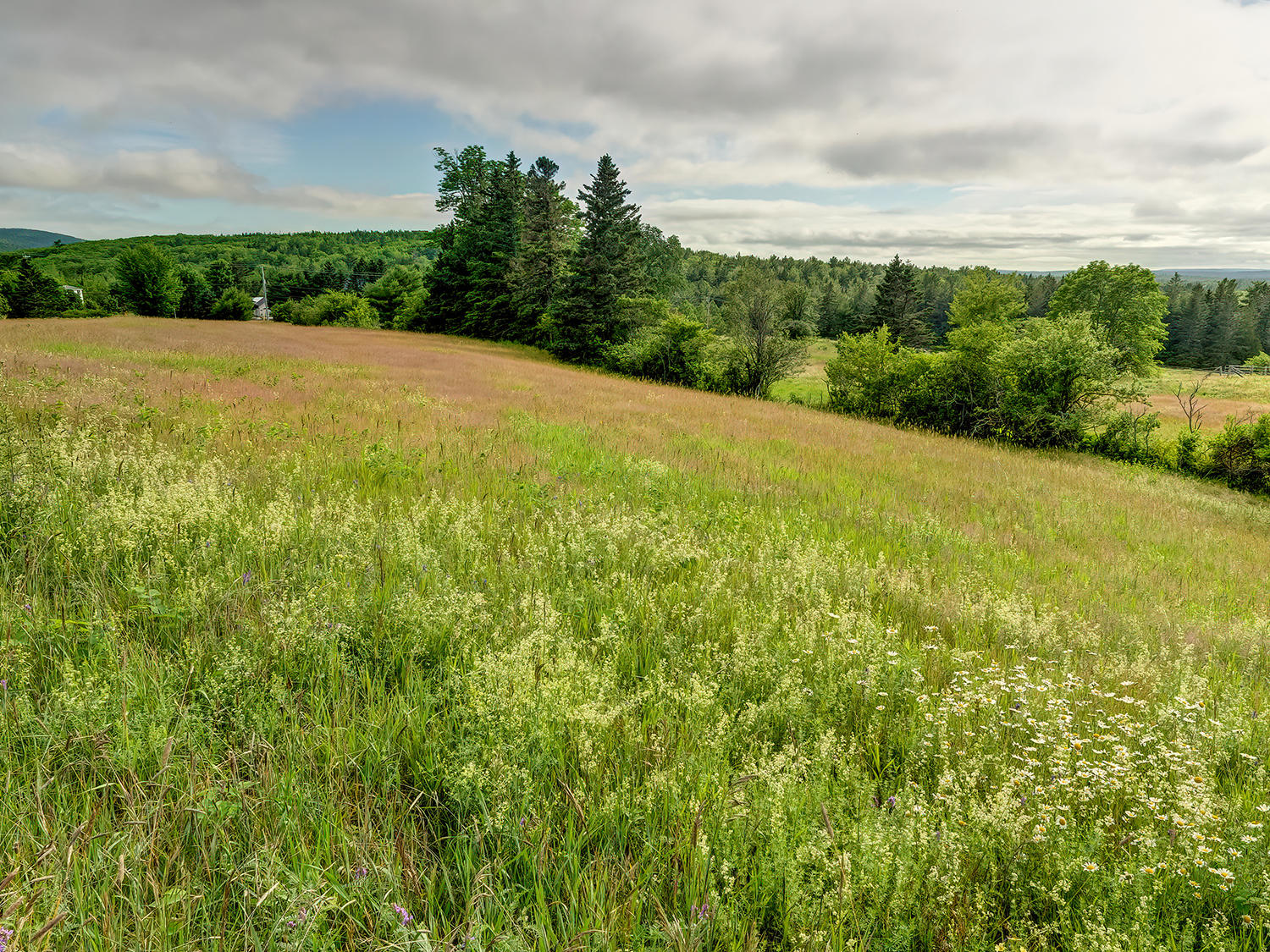 Meadow view