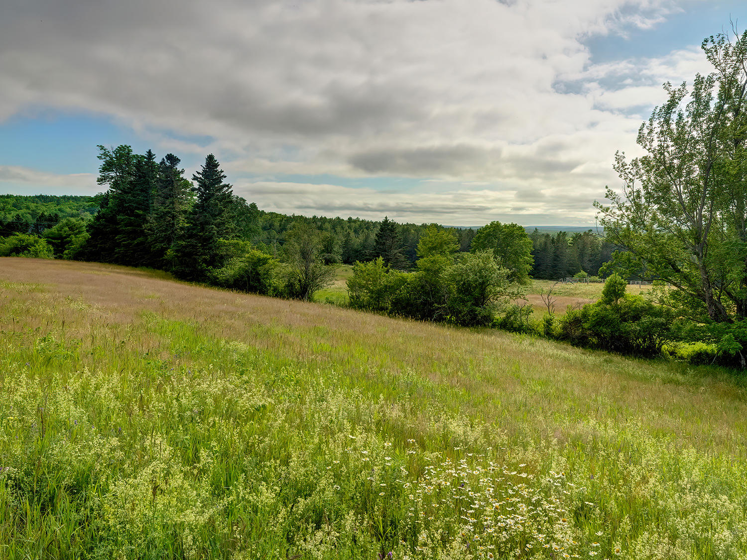 Meadow view 2