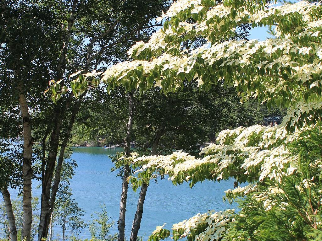 Water view with mature dogwood in...
