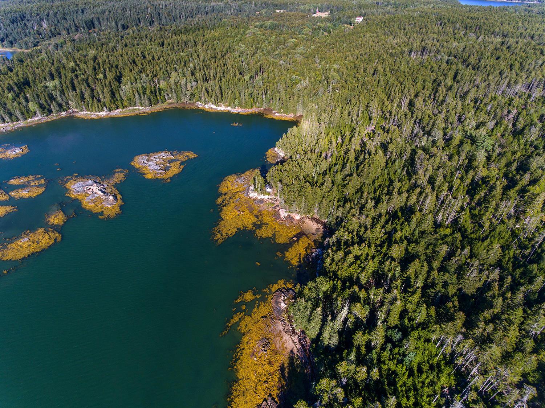 Seal Cove Aeials-Land-72
