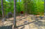 Garden shed & chicken coop