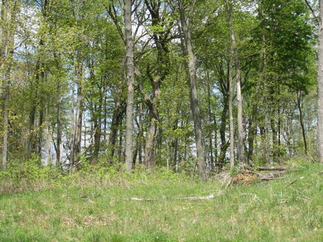 0 Ridge Creek Rd, Rhine, Wisconsin 53020, ,Vacant Land,For Sale,Ridge Creek Rd,1256649