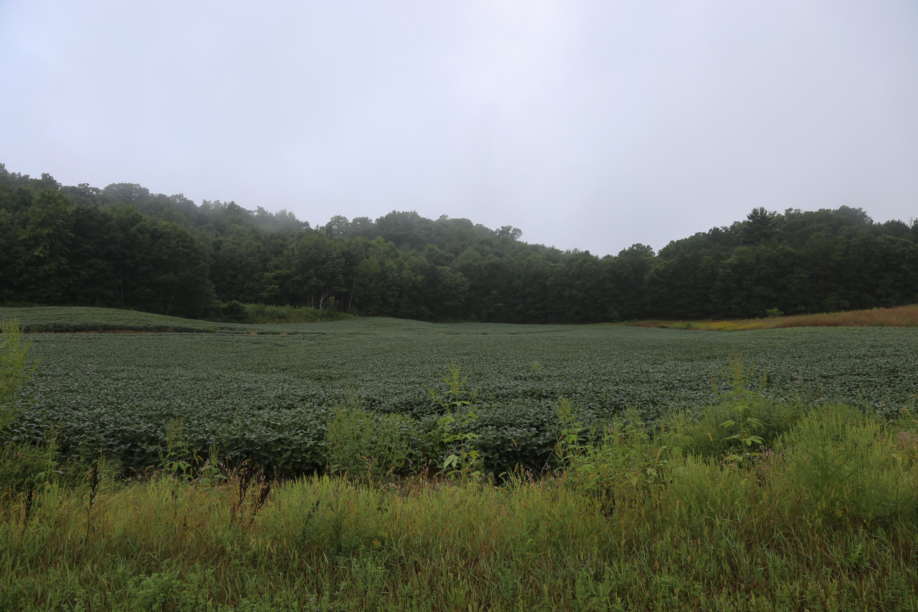 1.5 +/- Acres Highway 71, Little Falls, Wisconsin 54656, ,Vacant Land,For Sale,Acres Highway 71,1602712