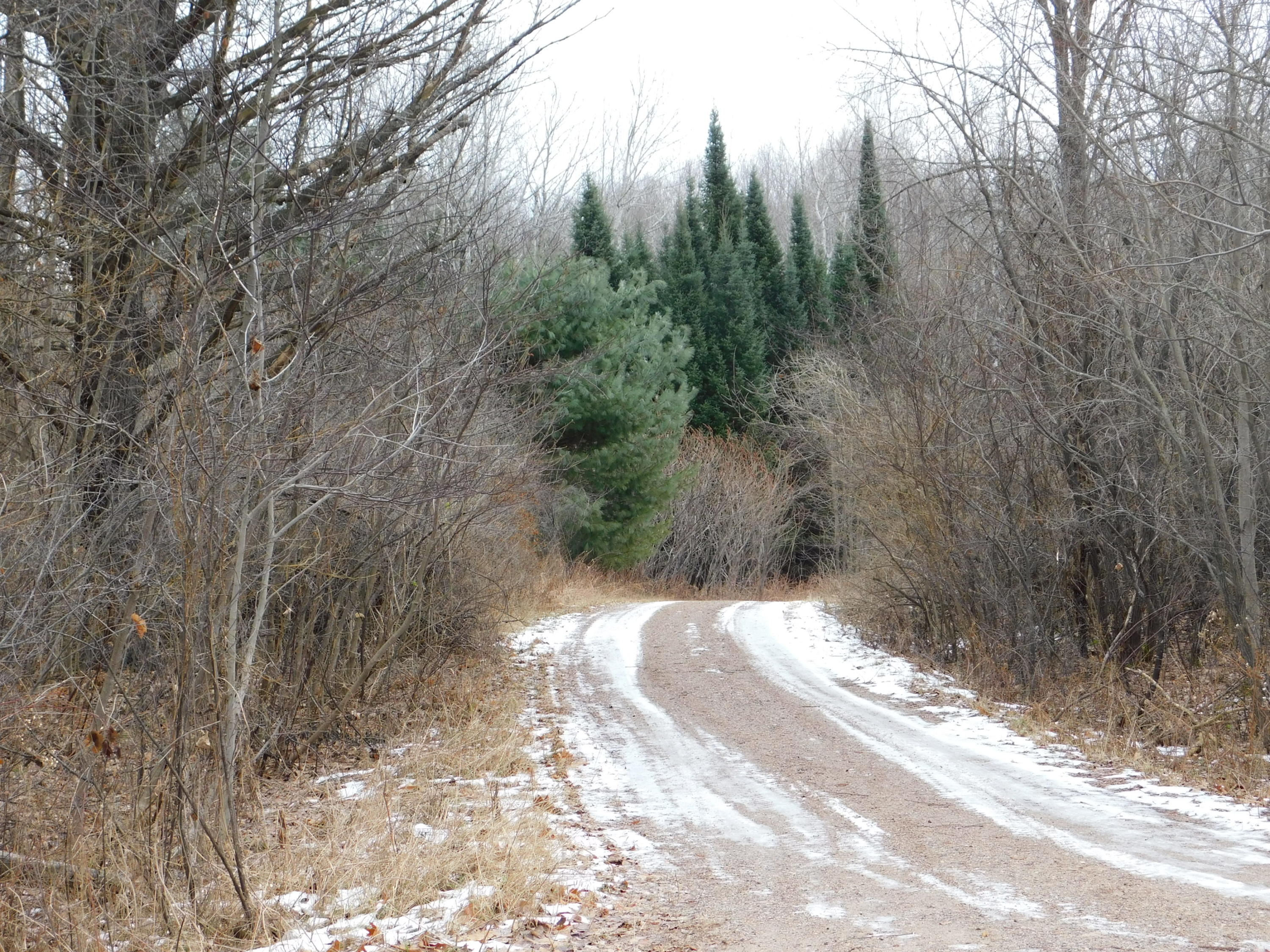 Lots Buettner Rd, Wolf River, Wisconsin 54491, ,Vacant Land,For Sale,Buettner Rd,1616195