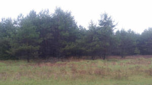Lot 81 Bracken Trail, Wausaukee, WI 54177