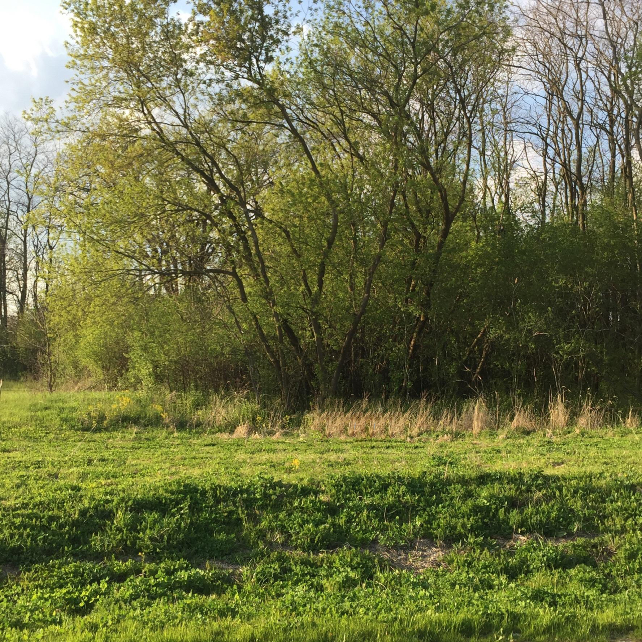 Lt5 Rookery Rd, Delafield, Wisconsin 53072, ,Vacant Land,For Sale,Rookery Rd,1622230